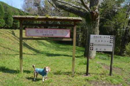 20200402佐倉の桜と桜城址公園29
