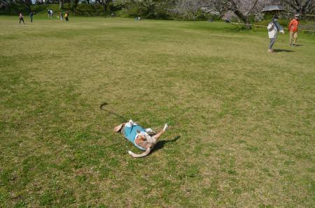 20200402佐倉の桜と桜城址公園33