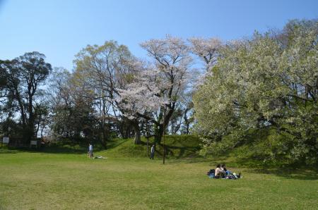 20200402佐倉の桜と桜城址公園32