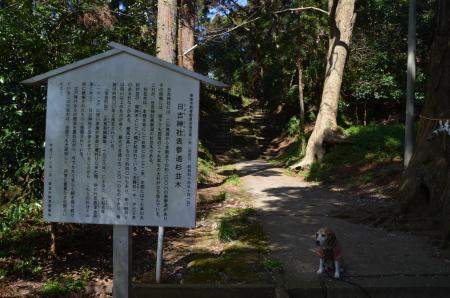 20200406日吉神社04