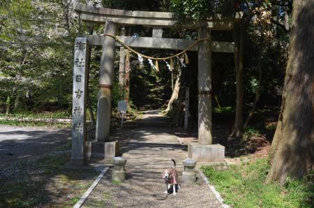 20200406日吉神社03