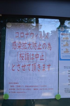 20200406日吉神社11