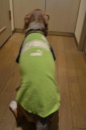 20200429犬服128PUMA16