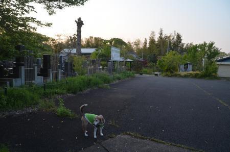 20200429番神道18