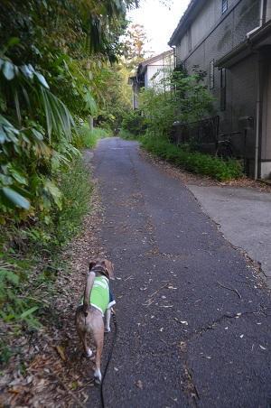 20200429番神道15