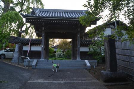 20200429番神道20