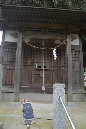 20200504浅間神社18