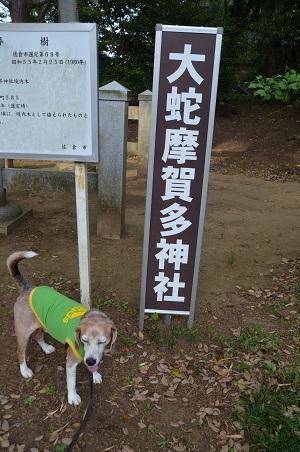 20200514大蛇麻賀多神社06