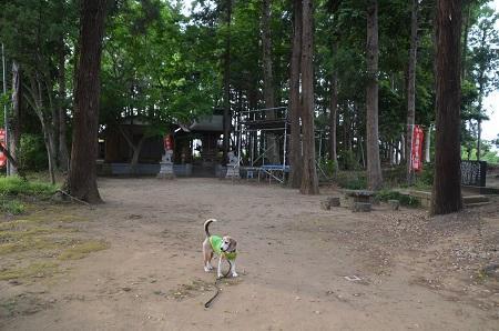 20200514大蛇麻賀多神社11