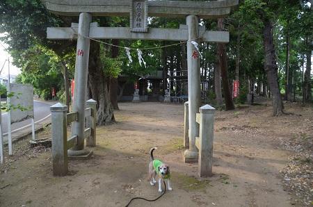 20200514大蛇麻賀多神社07