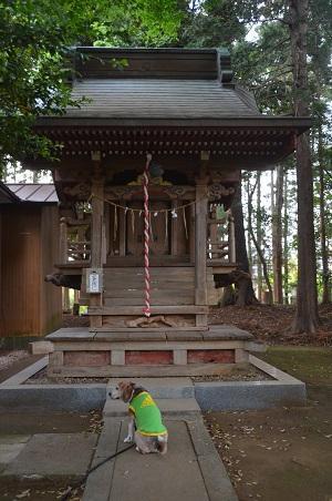 20200514大蛇麻賀多神社20