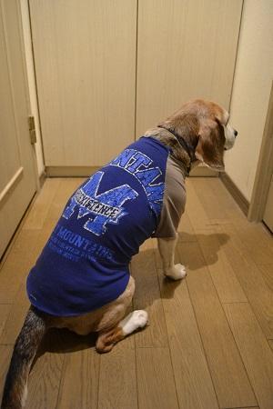 20200516犬服13917