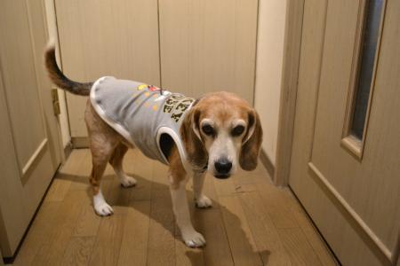 20200520犬服14128
