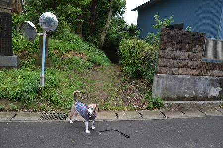 20200520熊野神社06