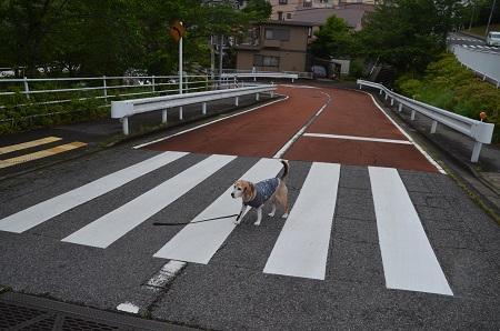 20200520熊野神社03