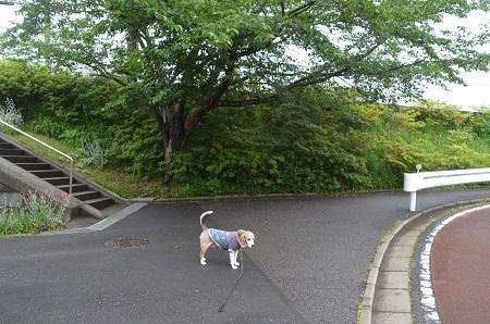 20200520熊野神社01