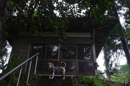 20200520熊野神社11