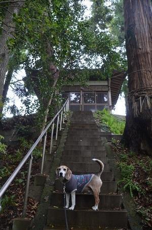 20200520熊野神社10