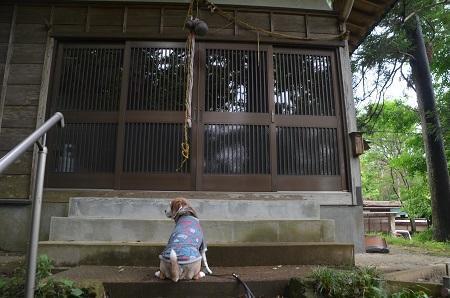 20200520熊野神社15