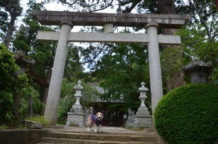 20200528松崎神社02