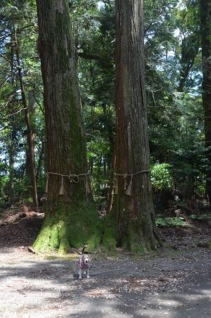20200529三島神社10