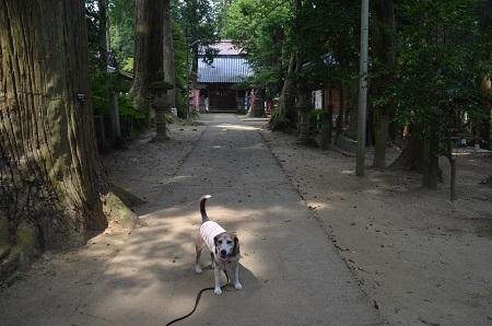 20200604東金日吉神社10