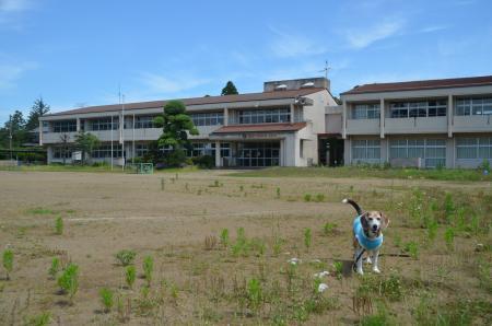 20200617福田小学校07