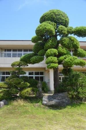 20200617福田小学校18