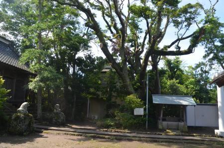 20200620愛宕神社13
