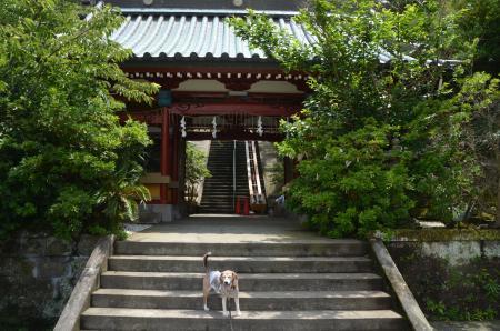 20200620州崎神社06