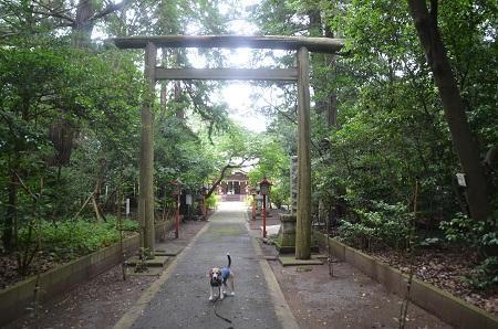 20200624宮川熊野神社05
