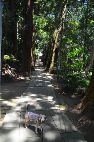 20200702東金日吉神社10