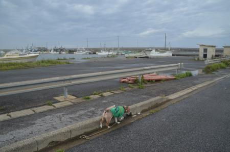 20200714片貝漁港09