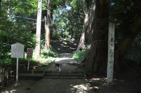20200803東金日吉神社03