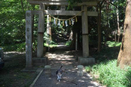 20200803東金日吉神社02