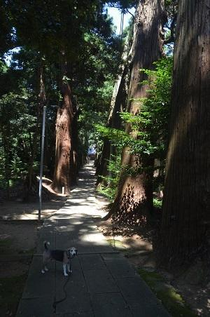 20200803東金日吉神社09