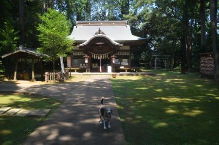 20200812成田豊住熊野神社05