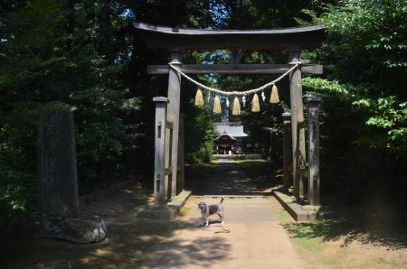20200812成田豊住熊野神社03