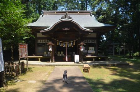 20200812成田豊住熊野神社11