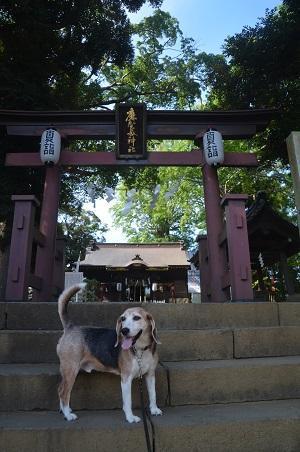 20200819麻賀多神社02