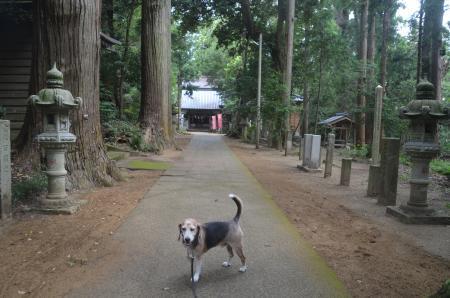 20200902東金日吉神社09