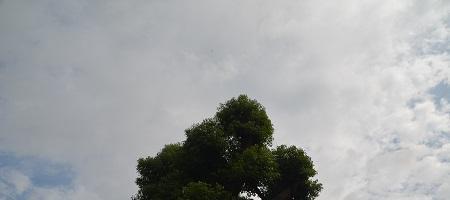 20200920飯野神社21