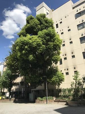 20200928西神田小学校跡04