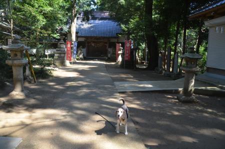 20201002東金日吉神社13