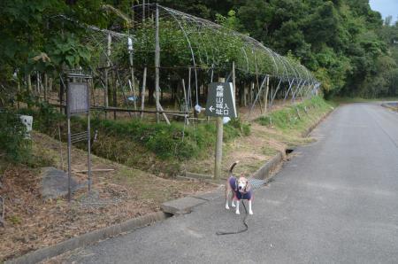 20201013高藤山城02