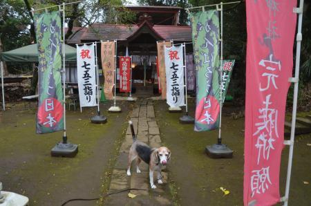 20201103冨里香取神社06