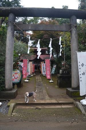 20201103冨里香取神社01