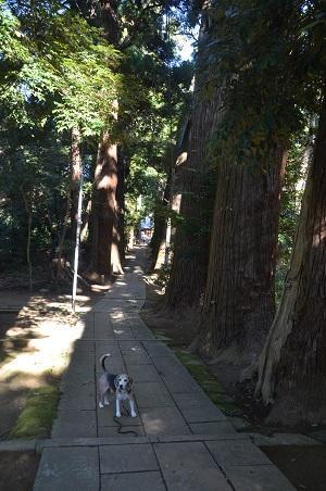 20201104東金日吉神社06