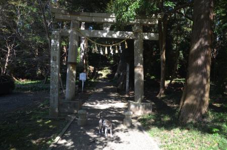 20201104東金日吉神社02