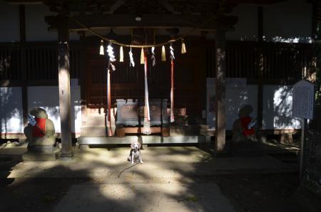 20201104東金日吉神社14